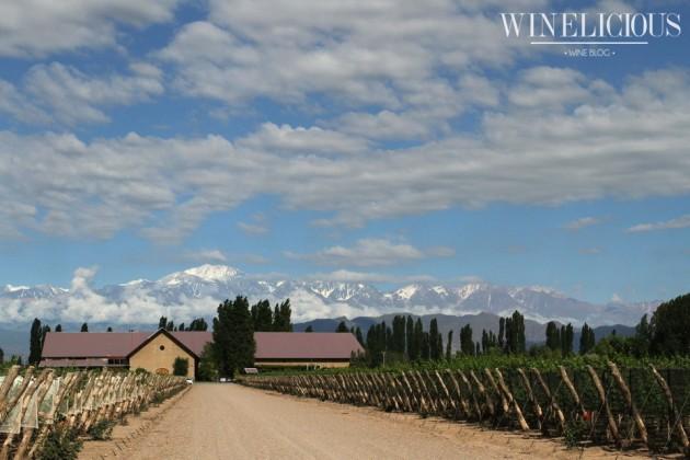 Apresentação vinícola (4)