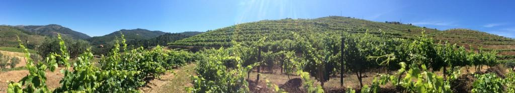 A União Europeia é líder mundial em produção, consumo, exportação e importação de vinho.